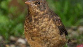 Garden Birds,UK.